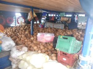 Kokosnoten zijn echt geld van de Kuna. 60.000 stuks gaan naar Colombia.